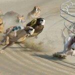 «Собачьи бега». Как лучше сберечь деньги? Проведем опыт!